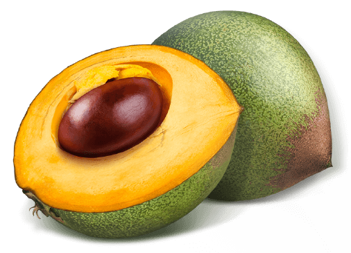 Fruit lucuma